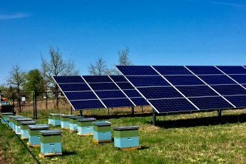 Solar Honey