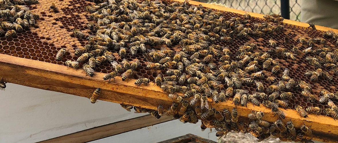 Meet Our Resident Beekeeper - Connexus Energy