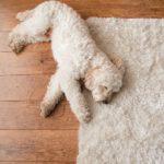 Cozy area rug